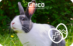 Boutiques d'animaux Chico Digital Gift Card #1